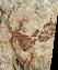 activ-arterupestre