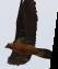 activ-ornitologia