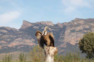 ornitologia-rodellar