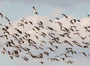 ornitologia-salto-roldan