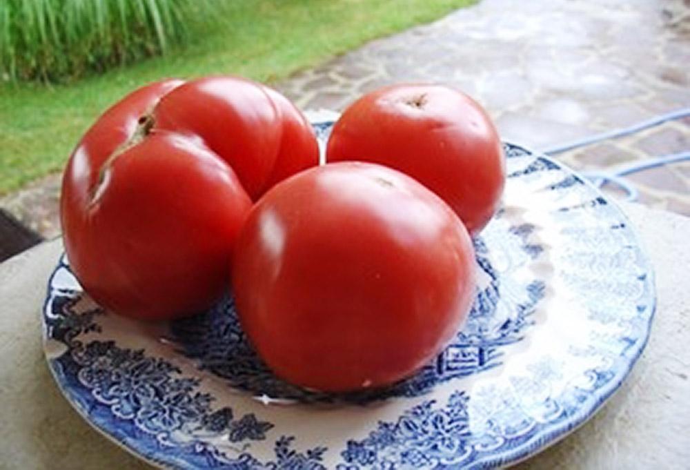 Historia de nuestro tomate asociaci n de empresarios de for Asociacion de cultivos tomate