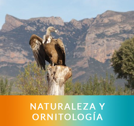 naturaleza-gy-ornitologa