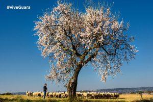sierra-guara-aire_puro-naturaleza-pueblos-paisajes-huesca-aragon-colungo